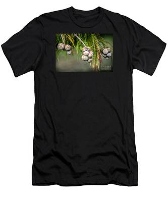Bald Cypress Tree Seed Pods Men's T-Shirt (Athletic Fit)