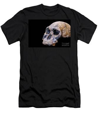 Designs Similar to Skull Of Homo Habilis
