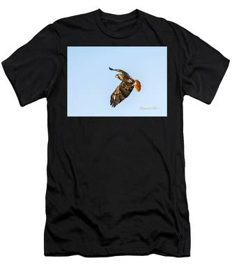 Red-tail Hawk In Flight Men's T-Shirt (Athletic Fit)