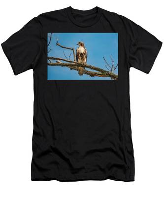 Red Tail Hawk Perched Men's T-Shirt (Athletic Fit)