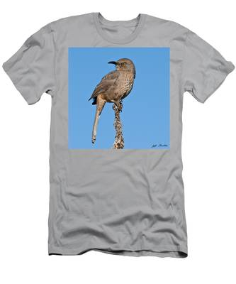 Curve-billed Thrasher Men's T-Shirt (Athletic Fit)