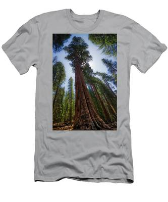 Giant Sequoia Tree Men's T-Shirt (Athletic Fit)