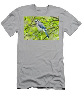 Springtime Bluejay Men's T-Shirt (Athletic Fit)