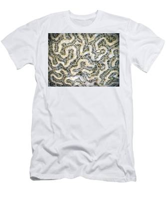 Fossilized Brain Coral Men's T-Shirt (Athletic Fit)