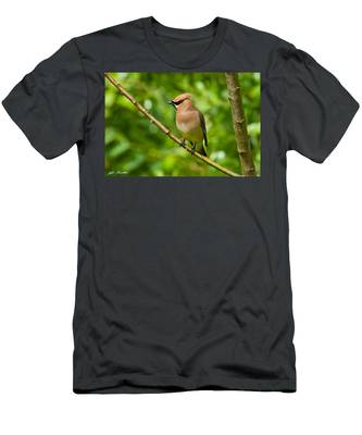 Cedar Waxwing Gathering Nesting Material Men's T-Shirt (Athletic Fit)