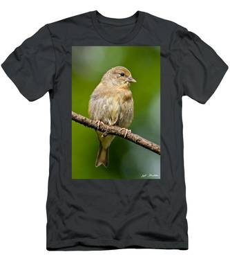 Juvenile American Goldfinch Men's T-Shirt (Athletic Fit)