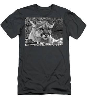 Mountain Lion Bergen County Zoo Men's T-Shirt (Athletic Fit)