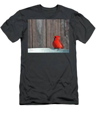 Cardinal Drinking Men's T-Shirt (Athletic Fit)