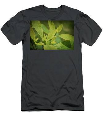 Sassafras Tree Men's T-Shirt (Athletic Fit)