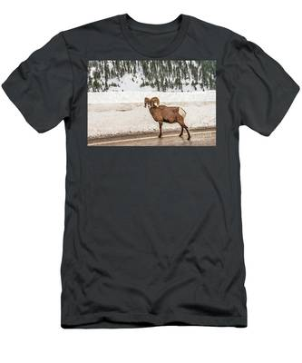 Bighorn Sheep Stopping Traffic Men's T-Shirt (Athletic Fit)