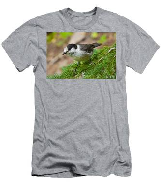 Gray Jay On Fir Tree Men's T-Shirt (Athletic Fit)