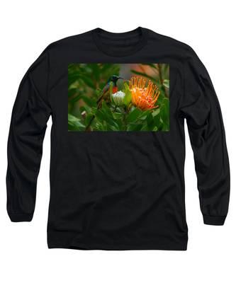 Designs Similar to Orange-breasted Sunbird II
