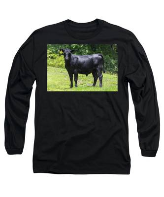 Staring Steer Long Sleeve T-Shirt