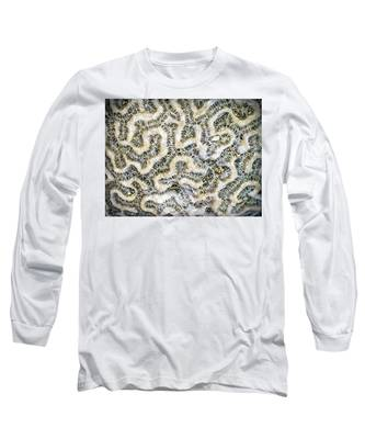 Fossilized Brain Coral Long Sleeve T-Shirt