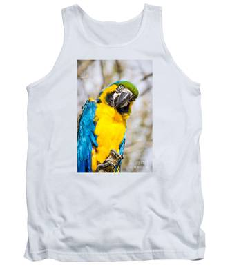 Blue And Gold Macaw Parrot Tank Top