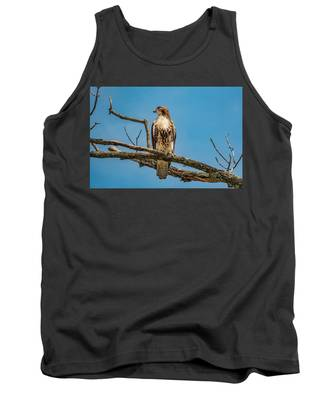 Red Tail Hawk Perched Tank Top