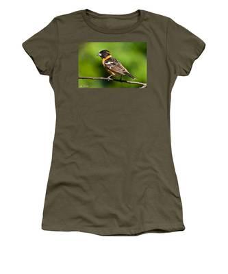 Male Black Headed Grosbeak In A Tree Women's T-Shirt