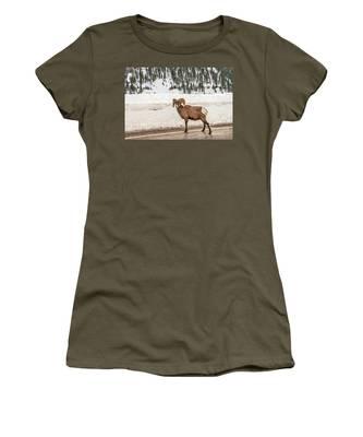 Bighorn Sheep Stopping Traffic Women's T-Shirt