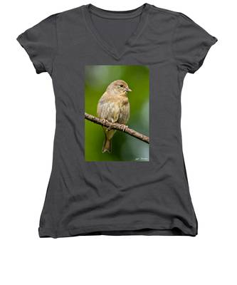 Juvenile American Goldfinch Women's V-Neck
