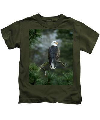 Designs Similar to Bald Eagle In Tree