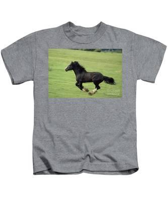 Draft Horse  Art Tee shirt  Belgian Percheron Shire
