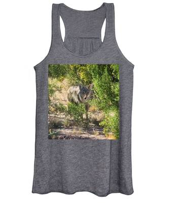 Women's Tank Top featuring the photograph Cautious Coyote by Judy Kennedy