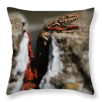 Throw Pillow featuring the photograph  A Lizard Emerging From Its Hole by Stwayne Keubrick