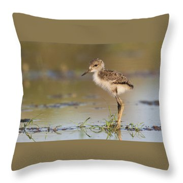 Throw Pillow featuring the photograph  Baby Stilt Standing Alone by Ruth Jolly