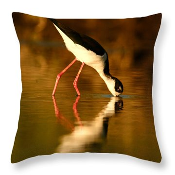 Throw Pillow featuring the photograph  Black-necked Stilt Reflection by John F Tsumas