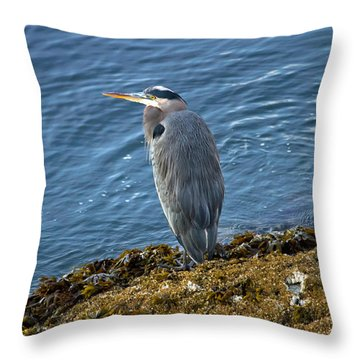 Throw Pillow featuring the photograph  Blue Heron On A Rock by Eti Reid