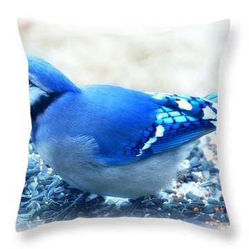 Bright Blue Jay  Throw Pillow