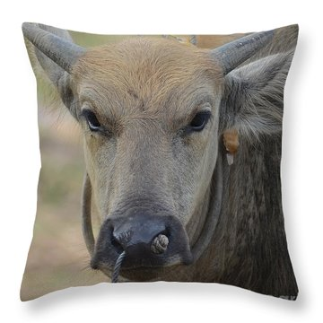 Buffalo Throw Pillow by Michelle Meenawong