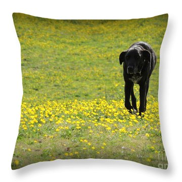 Cody In Black And Yellow Throw Pillow