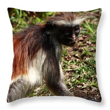 Colobus Monkey Throw Pillow by Aidan Moran