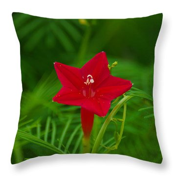 Throw Pillow featuring the photograph  Cypressvine Morning Glory by Blair Wainman