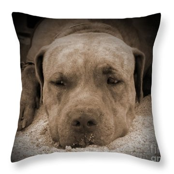 Throw Pillow featuring the photograph  Don't Disturb Me by Michelle Meenawong