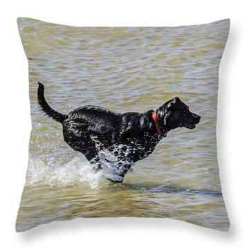 Fetch The Ball Throw Pillow