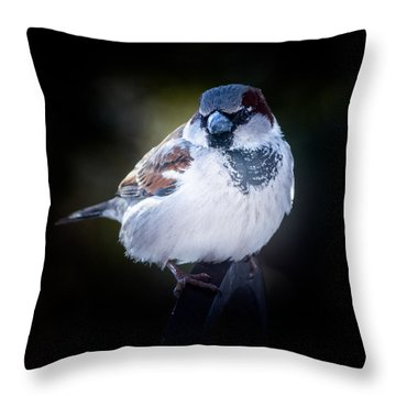 House Sparrow  Throw Pillow by Kenneth Cole
