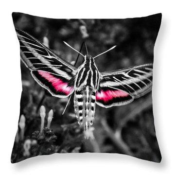 Hummingbird Moth Bw Print Throw Pillow