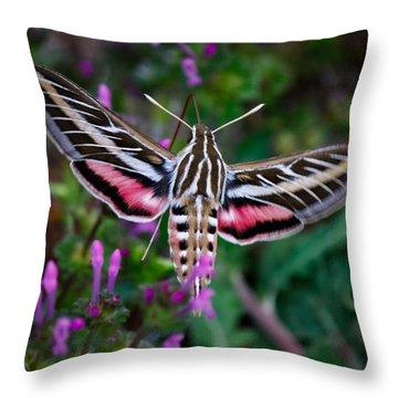 Hummingbird Moth Print Throw Pillow