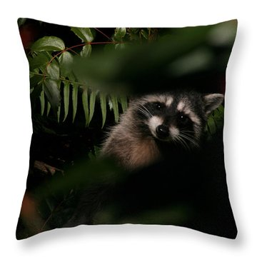 Throw Pillow featuring the photograph  I Can See You  Mr. Raccoon by Kym Backland