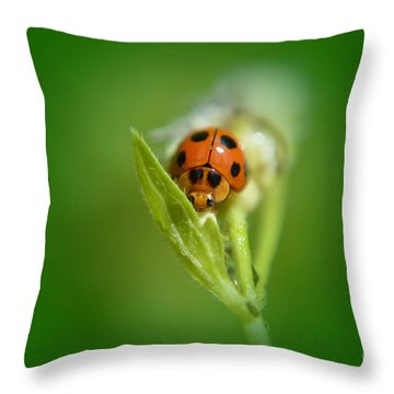 Throw Pillow featuring the photograph  Ladybug by Michelle Meenawong