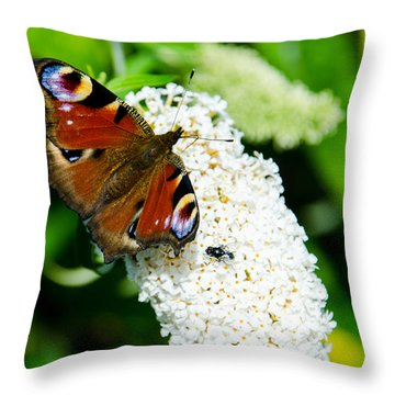 Peacock Butterfly Throw Pillow by Martina Fagan