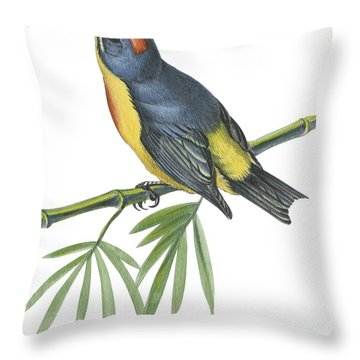 Philippine Flowerpecker Throw Pillow by Anonymous