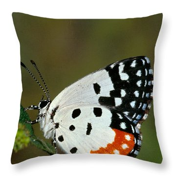 Red Pierrot Butterfly Throw Pillow by Anonymous