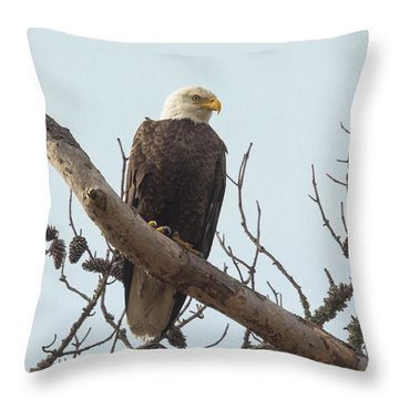 Resting Bald Eagle Throw Pillow