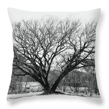 Throw Pillow featuring the photograph   Ross's Untiring Tree by J L Zarek