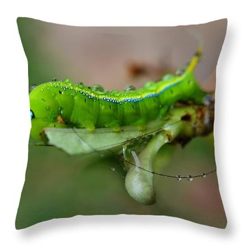 Throw Pillow featuring the photograph  Wet Caterpillar by Michelle Meenawong