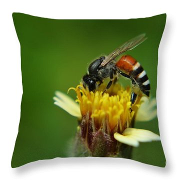 Working Bee Throw Pillow by Michelle Meenawong