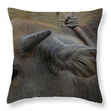 Young Buffalo Throw Pillow by Michelle Meenawong